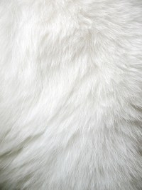 white fur on Tumblr