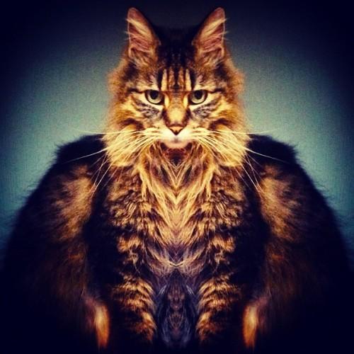 thefluffingtonpost: PHOTO OP: Emperor Kitty Via olylo.