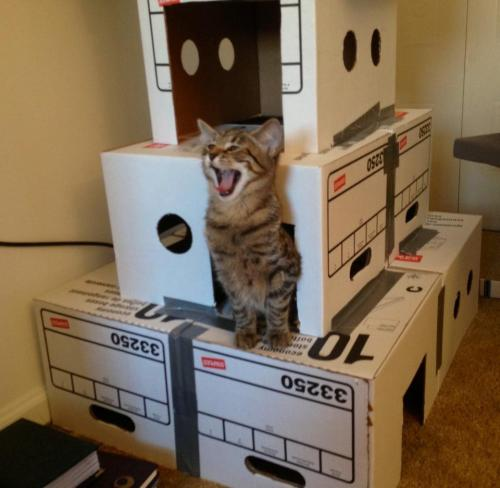 Kitten on Box Fort