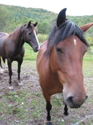 West Sandgate Horses