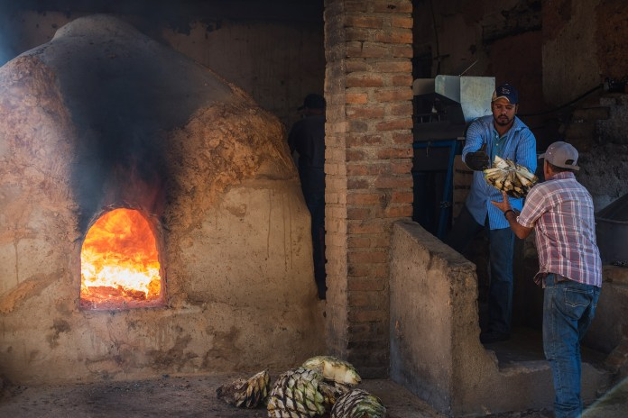 Large earthen oven with roaring fire, two men passing agave hearts