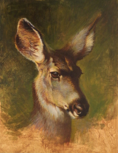 "Ezra Tucker - ""Mule Deer Doe Portrait"""