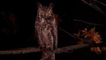 An owl perched on a tree branch at night