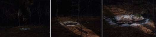 glastonbury-grove-ghostwood