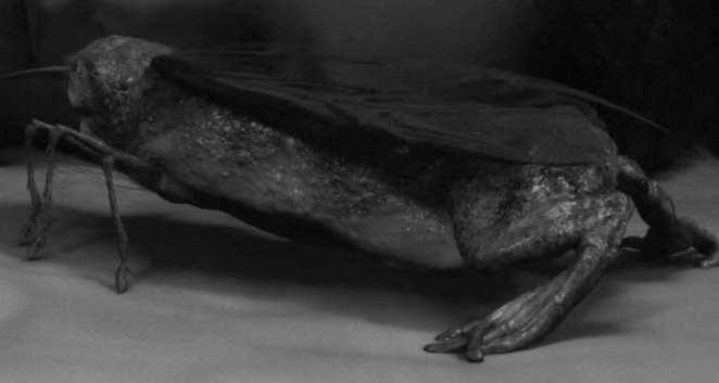mothfrog