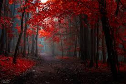 Red Forest 2