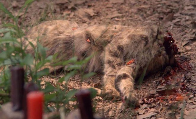 Ritual animal mutilation in The Believers