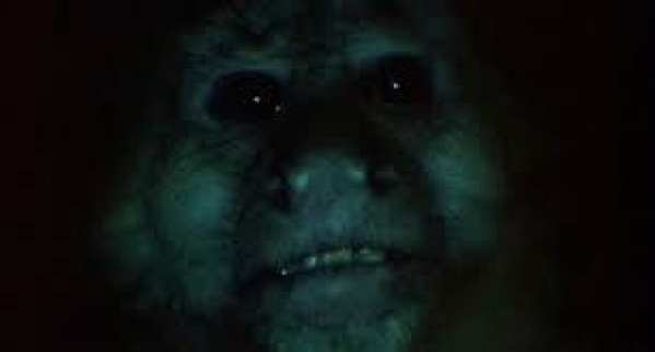 a close up of a monkey face in the dark