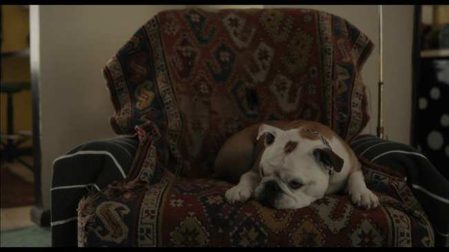 Marvin, the destructive dog in the movie Paterson.