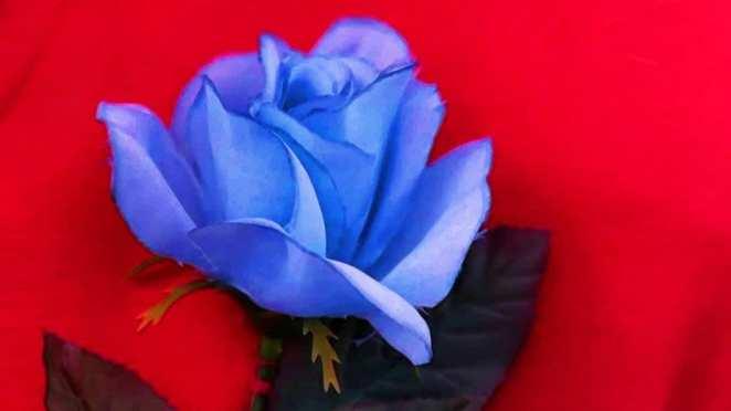 Blue Rose Twin Peaks