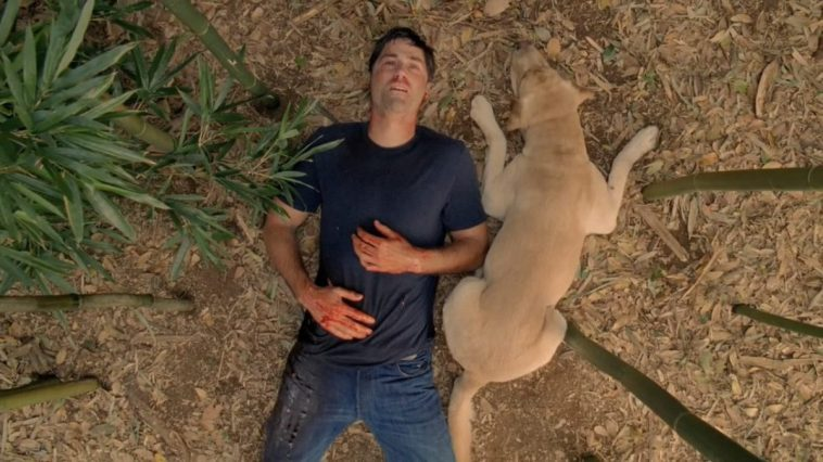 Jack dies in the jungle with Vincent at his side in the Lost series finale