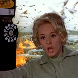 tippi hedren in a phone booth being attacked by birds