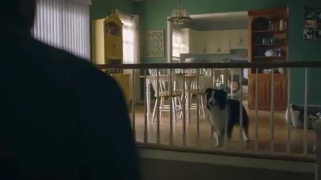A dog, a small collie mix, looks through a railing at a man standing just off screen.