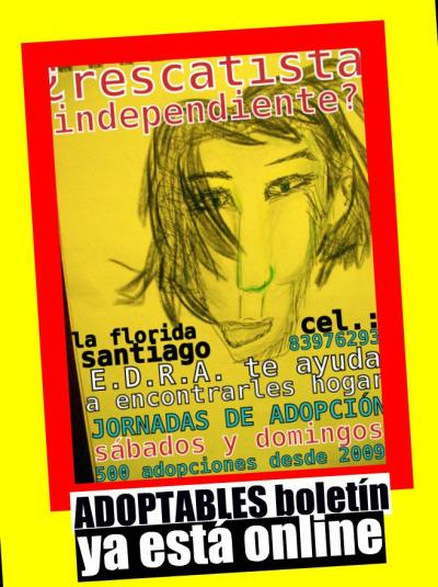 adoptables:  Adoptables boletín ya está online. Afiches/flyers