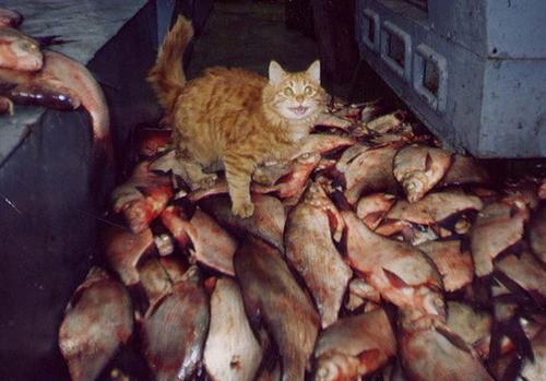 namingguey:  ceronprime:  dadadisco:  PUMPED CAT DOT JPEG   HE LOOKS SO HAPPY.