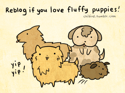 chibird:  I don't expect everyone (becauseeveryoneloves fluffy puppies) to reblog this, but I needed an excuse to draw derpy puppies. XD <3Pomeraniansare so cute.