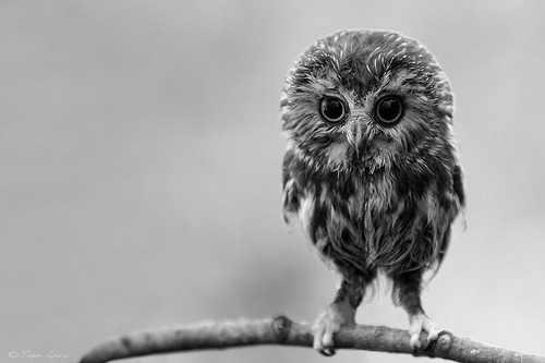 herowithnocape:</p> <p>Hooty &amp;lt;3</p> <p>Eeeek!!!! So cute