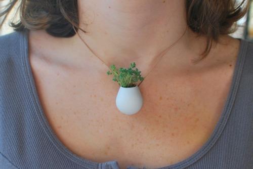 Маленькие живые растения - кулоны.