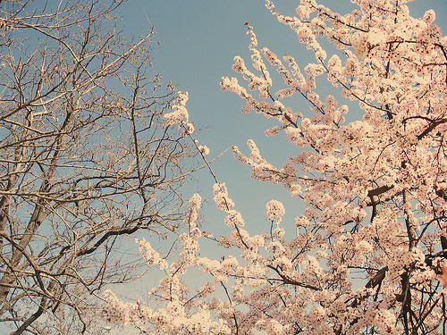 odio el invierno (by variationsonthewordsleep)