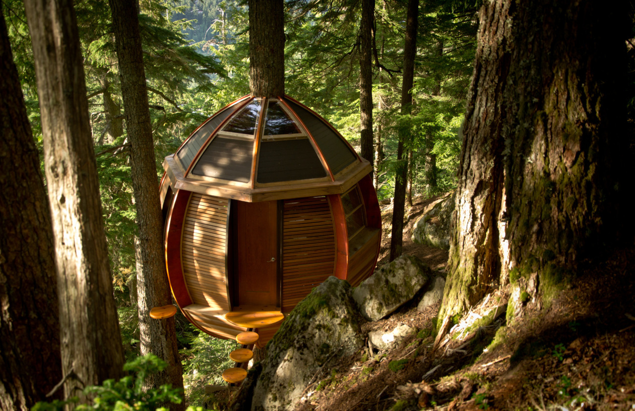 A treehouse in the woods near Whistler, British Columbia, Canada.<br /><br /><br /><br /> Submitted by Joel Allen.
