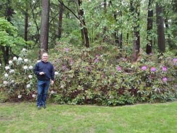 Gigantic rhododendrons