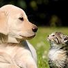 【ペットの献血】事故や手術!輸血で左右されるペットの命…動物医療の現場と課題