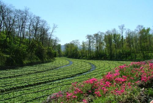 わさびのテーマパークとも呼ばれている長野県安曇野市の「大王わさび農場」
