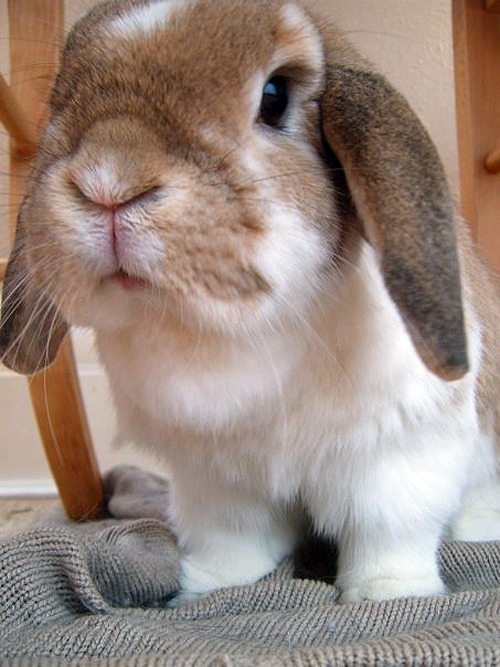 Image result for bunny nose gif