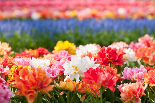 """""""Flowers in a field"""""""