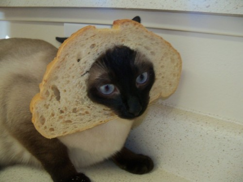Breaded Cats - cat breading