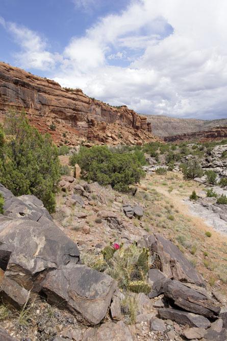 El Área de Domínguez-Escalante Nacional de Conservación abarca 209,610 hectáreas de tierras administradas por el BLM-en Mesa, Delta y los condados de Montrose en el oeste de Colorado.  Conocido por su valor paisajístico, estas tierras son muy populares para aquellos que quieran ver el país espectacular cañón de la meseta de Uncompahgre.  La roca roja de cañones y acantilados de arenisca poseen recursos geológicos y paleontológicos que abarcan 600 millones de años, así como muchos lugares de interés cultural e histórico.  Las tribus Ute consideran hoy en día éstos piñón-enebro cubierta tierras una importante conexión con su pasado ancestral.  El Escalante, Cottonwood, Little y Big Domínguez calas en cascada a través de las paredes del cañón de piedra arenisca que drenan la meseta oriental Uncompahgre.  Cerca de 30 kilómetros de la corriente del río Gunnison a través de la autoridad nacional de competencia.  El español antiguo Sendero Histórico Nacional, un país del siglo 19 la ruta comercial, se encuentra dentro de la ANC.  Una gran variedad de vida silvestre llamar a la casa de la zona, incluyendo borrego cimarrón, venado bura, el águila real, el pavo, el alce, el león de montaña, el oso negro y el cuello lizard.Photo: BLM-Colorado