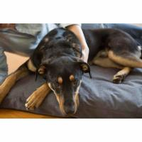 Underdog Orthopedic Dog Bed Review | MHL