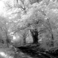 Replacing Efke 820 IR Film with Rollei IR 400