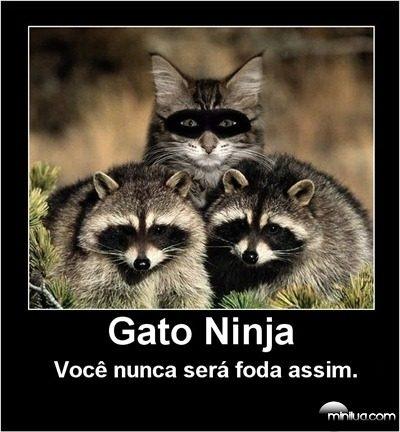 legomundus:  Gato ninja! Onde menos esperas, ele estará…