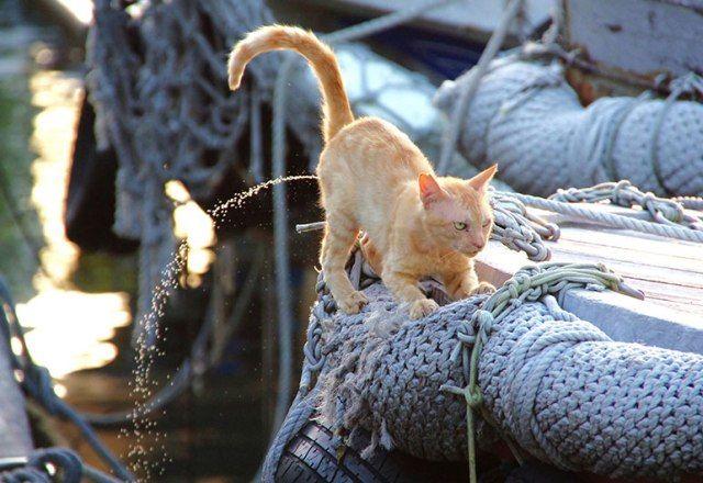 池袋で発見!WACCA「猫の目線 フォトコンテスト」写真展!<GWねこ祭り④>