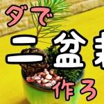 【ミニ盆栽】初心者でも簡単に作れます。 #ミニ盆栽 #初心者 #ただで作る