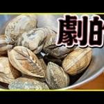 【砂出し】あさりの美味しさが劇的に進化する下処理のやり方教えます!【貝】【砂抜き】【準備】【アサリ】Vol.102