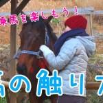 馬の触り方~安全に乗馬を楽しもう!~