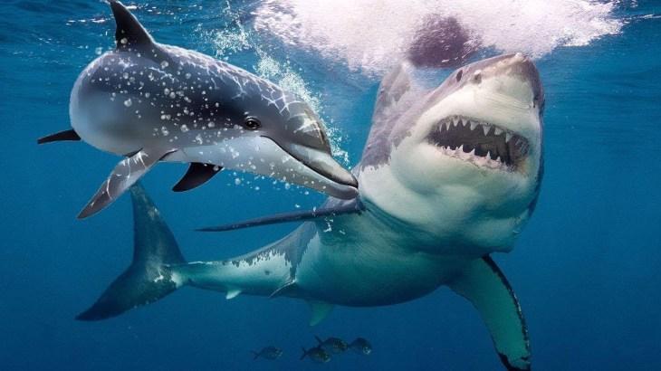 サメはなぜイルカを恐れるのでしょうか?