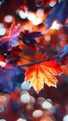 automne manifesto