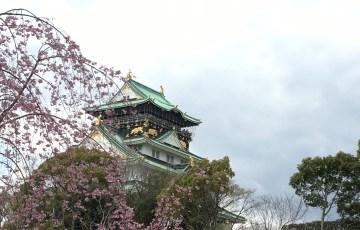 大阪城 公園 桜 お花見 大阪城公園