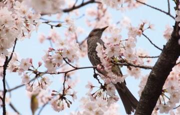 バードウォッチング 大阪城公園 野鳥