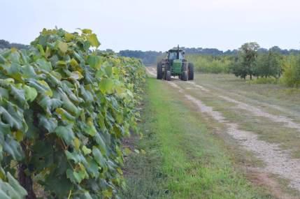 Schultz Fruitridge Farms