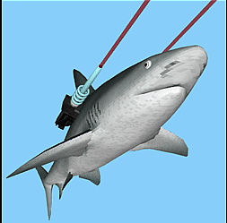 sharks with lasers two