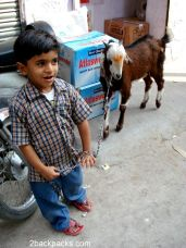A young herder