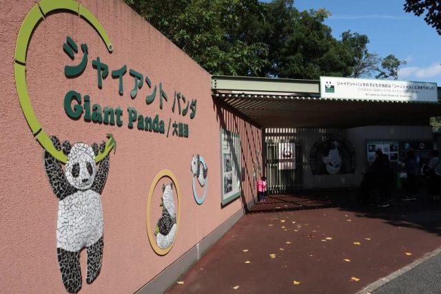 Giant Panda 大熊猫 Ueno Zoo Tokyo