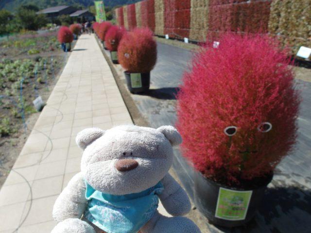 Cute potted plants at Kawaguchiko Natural Living Center
