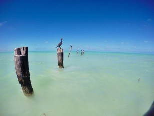 Holbox Sea Birds