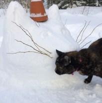 cat_head_snow_2