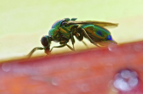 Colourful Insect